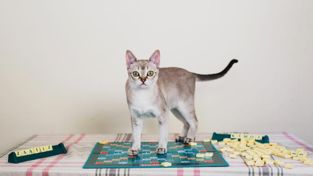 inteligentne koty zagadka