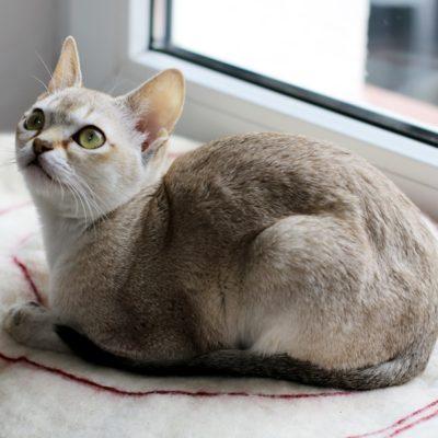 najmniejszy kot świata