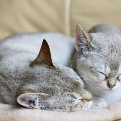 Koty miłości