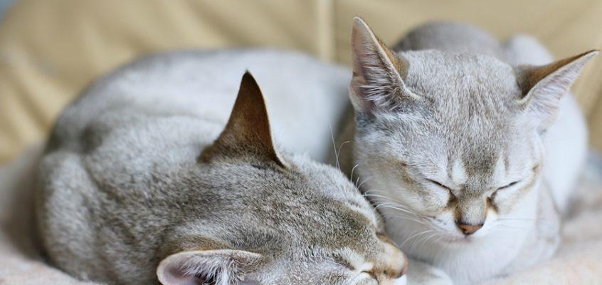 Czego potrzebują koty do szczęścia?