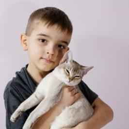 jak obchodzić się z kotem