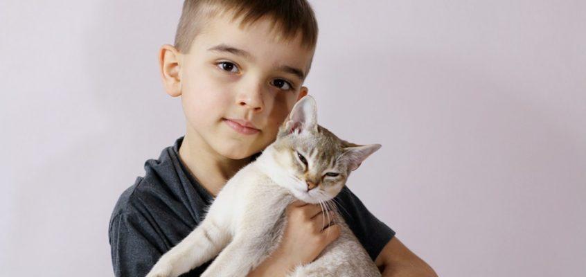 Jak obchodzić się z kotem? Porady felinoterapeutki.