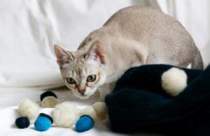najlepsze zabawy z kotem w co się bawić