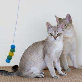 zabawa z kotem korzyści ważna dla rozwoju kota
