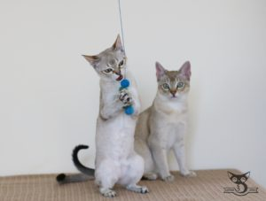zalety korzyści dla kota i człowieka z zabawy z kotem