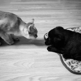 pies czy kot kto z nich jest lepszy