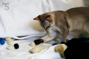 najlepsza zabawka dla kota