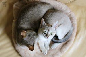 kot jest lepszy od psa 23 powody by mieć w domu kota