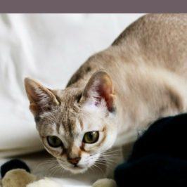 jak widzą koty SingaLove
