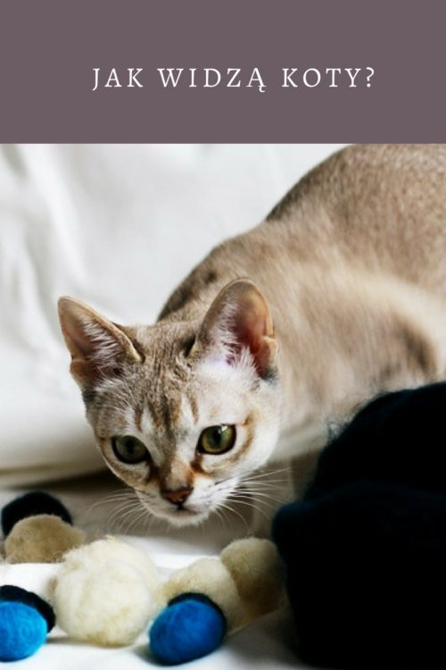 Jak widzą koty?