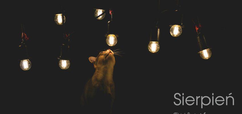 kalendarz z kotami SingaLove