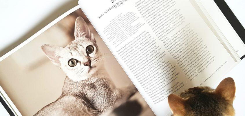 Singapura – charakter kotów singapurskich