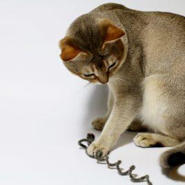 wędka dla kota zabawki SingaLove