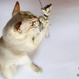 wędka dla kota z ptaszkiem SingaLove