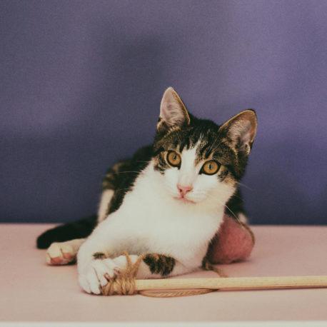 the-best-toy-for-cat-kocia-zabawka