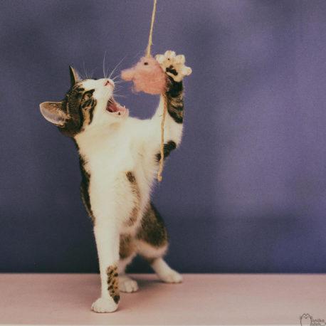 wędka dla kota z myszką zabawki SingaLove