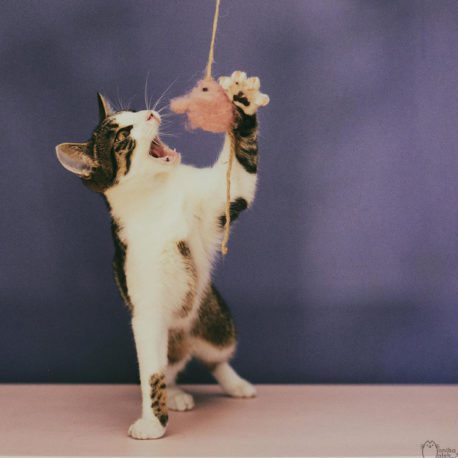 wedka-dla-kota-z-myszka-zabawki-SingaLove