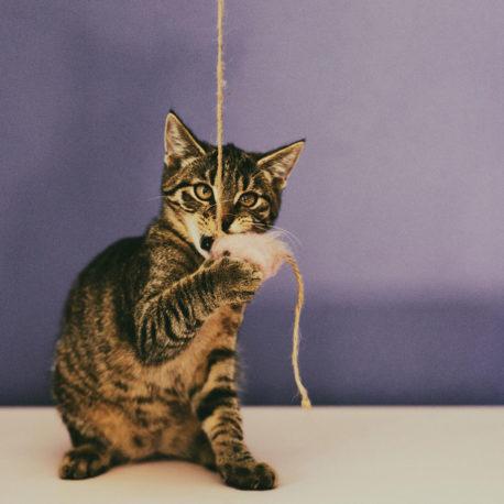 zabawka-dla-kota-SingaLove