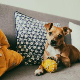 zabawka dla psa eco piłka SingaLove pies