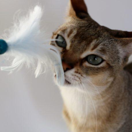 zabawka-dla-kotka-kocimietka-piorka-waleriana