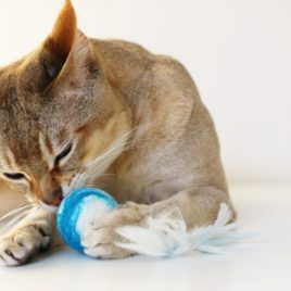 zabawka dla kotka SingaLove kocie zabawki