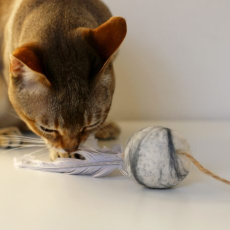 zabawka-dla-kotka-singapurskiego-singalove- hodowla