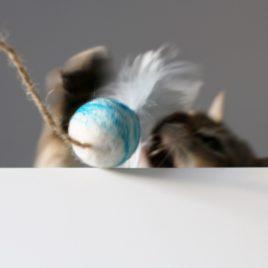 zabawka dla kotka wędka SingaLove premium