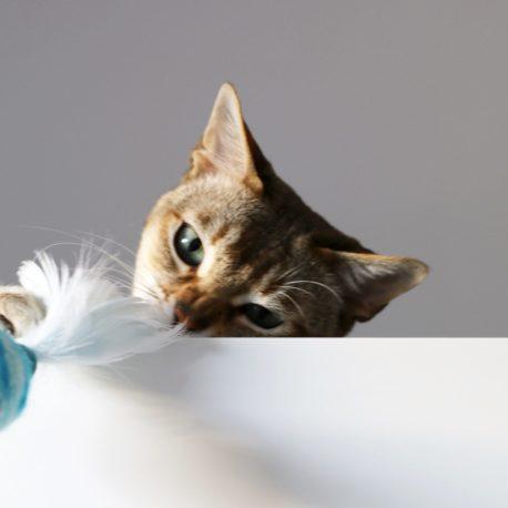 zabawka-dla-kotka-wedka-singalove-premium-sklep-online